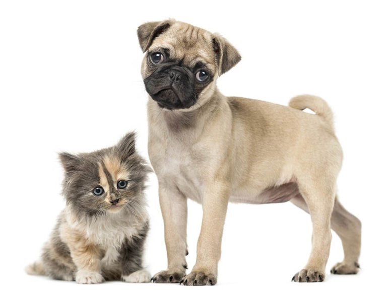 Pet Insurance Calculator