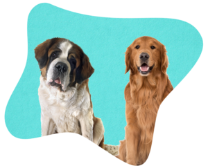 Is your dog covered for vet bills