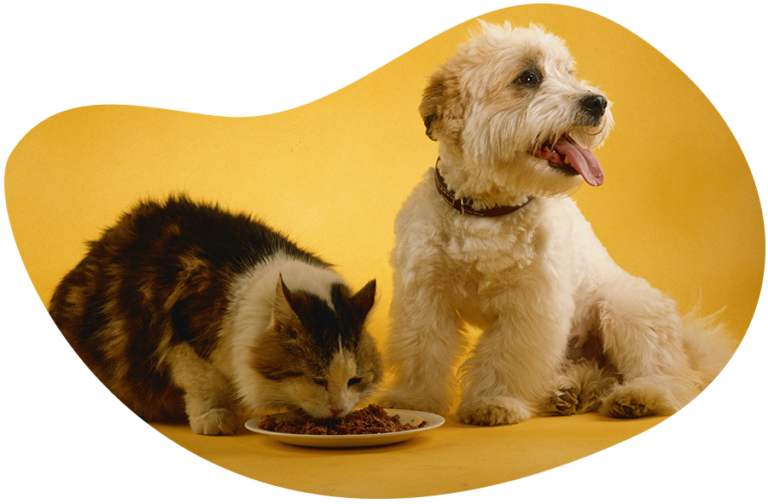 Is chicken dangerous for dogs and cats